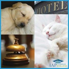 certificate-course-pet-hotel_IAPCC