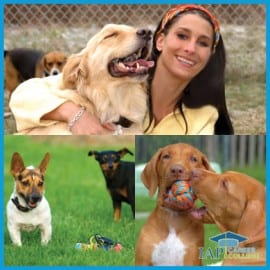 dog-daycare-owner-certificate-course-online-certification