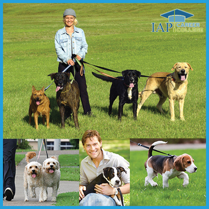 Dog Walker Certificate Course Online | How to Become a Dog Walker | Dog walking training