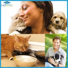 Pet sitter certificate course online | How to become a pet sitter and how to start a pet sitting business